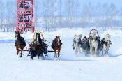 Накануне «Сибирской Масленицы» на ипподроме «Алтай» в Смоленском районе прошли конные бега.