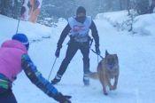 Алтайские кинологи-спортсмены - победители и призёры II этапа Кубка России по гонке-буксировке.