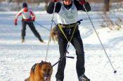 Алтайские кинологи-спортсмены – победители и призёры чемпионата, первенства и финала Кубка России.