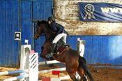 Алтайские конники привезли 23 личных медали и 5 командных кубков с чемпионата и первенства СФО в помещении (фото).