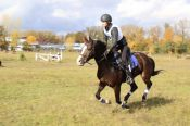 Алтайские конники - победители чемпионата Сибирского федерального округа по троеборью.