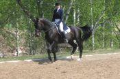 Барнаульские конники вернулись домой с чемпионата и Первенства Сибирского федерального округа по выездке.