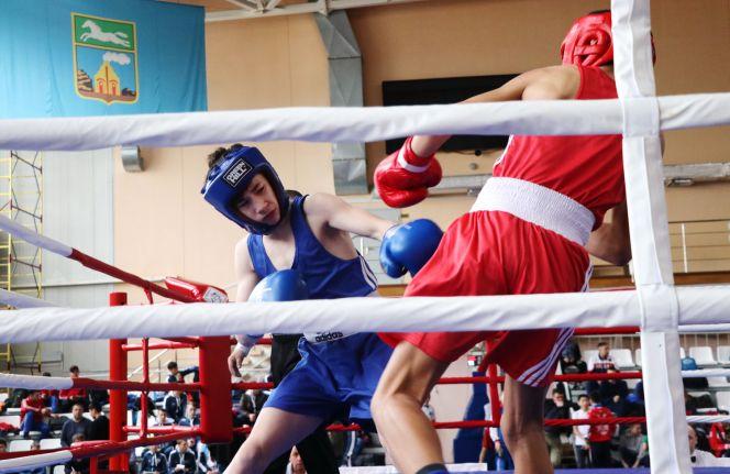 Первенство СФО по боксу среди юношей 2005-2006 г.р. Фото: Вадим Вязанцев.