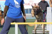 Команда кинологов Алтайского края на чемпионате ДОСААФ России по спортивно-прикладному собаководству заняла первое место в общекомандном зачёте.
