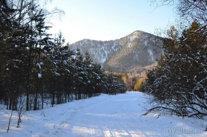 Лыжная трасса биатлонного комплекса «АлтайSKIй» проложена по живописным местам вдоль реки Сосновка. Фото: http://myaltai.ru/
