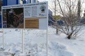 1 декабря в Бийске откроется «Тропа здоровья» для любителей скандинавской ходьбы