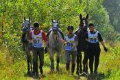 В Новосибирске впервые состоялись соревнования «Сибирская осень» по дистанционным конным пробегам, в которых алтайские спортсмены заняли почти все призовые места.